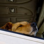 都道府県別犬猫飼育頭数-貯蓄残高データ比較